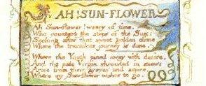 Blake Ah sunflower